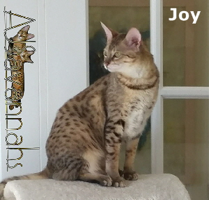 AJSavannahs F3C Joy 051418 a